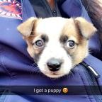 """Puppy Bump"""